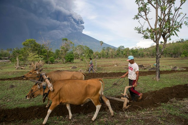A Balinese farmer works on his farm as the Mount Agung volcano spews volcanic ash in Karangasem, Bali, Indonesia, 26 November 2017. According to reports from the Energy and Mineral Resources Ministry's Volcanology and Geological Hazard Mitigation Center (PVMBG), the volcano has erupted and is spewing an ash cloud more than 1,500 meters in height. The airlines Jetstar and Quantas have cancelled all flights to and from Bali as a result of the eruption. (Photo by Made Nagi/EPA/EFE)