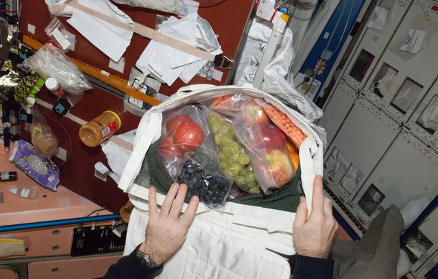The hands of Expedition 34 Commander Kevin Ford, opening a bag revealing a highly welcomed shipment of fruit which was sent up from Earth a couple of days earlier and which arrived at the International Space Station on March 3, 2013. It was just a very small portion of all the fresh supplies which arrived aboard the unmanned Space X Dragon spacecraft. (Photo by NASA/The Atlantic)