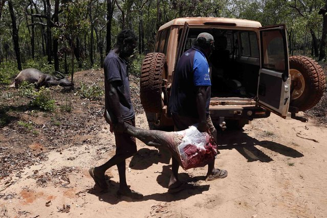 Australian Aboriginal Norman Daymirringu (R) and friend James Gengi of the Yolngu people load the leg of a buffalo, which they intend to cook, into their vehicle after they discovered it dead on the side of a dirt track on the outskirts of Ramingining in East Arnhem Land November 21, 2014. (Photo by David Gray/Reuters)