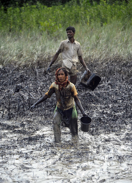 Villagers hold containers to collect oil after an oil tanker sank in one of the world's largest mangrove forests in the Sundarbans, in Joymani village, Bangladesh, Saturday, December 13, 2014. The oil tanker carrying more than 350,000 liters (92,500 gallons) of bunker oil sank Tuesday on the major river flowing through the Sundarbans after being hit by a cargo vessel. (Photo by AP Photo)