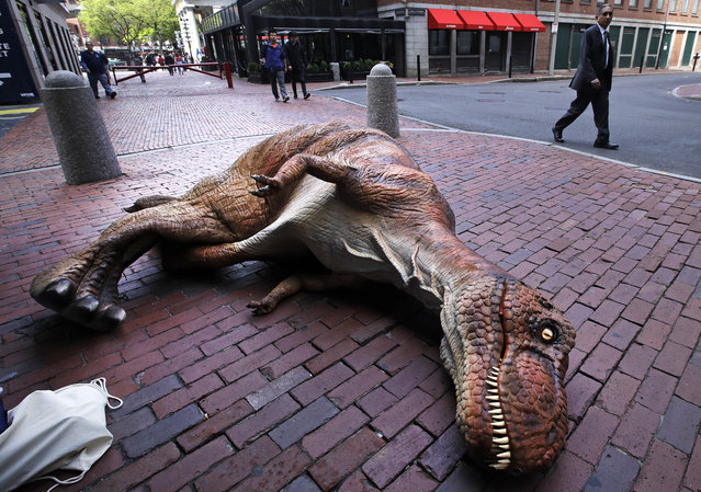 A businessman walks past an empty baby Tyrannosaurus rex costume near Faneuil Hall in Boston, Thursday, May 17, 2018. An actor left the costume on the sidewalk as he went to retrieve his parked car, after entertaining midday tourists. (Photo by Charles Krupa/AP Photo)