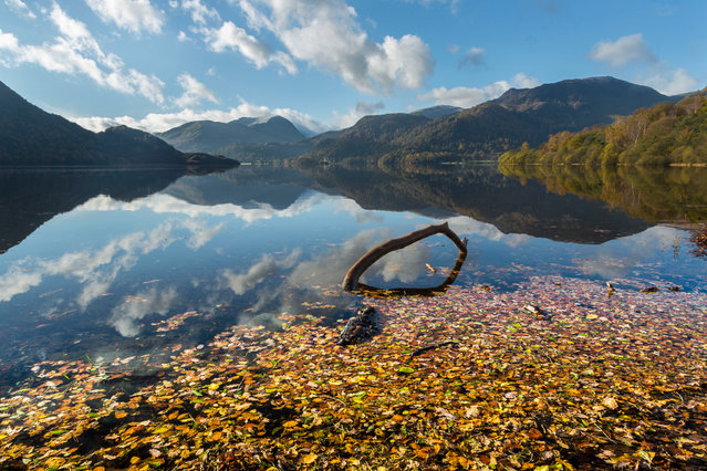 Ullswater Aira Force, Lake District, UK, 2016. The lakeshore between Aira Force and Glenridding is fringed with colour in autumn. The beech trees along the shore near Glenridding are spectacular and accessible, with easy walks from the roadside. The new boat landing at Aira Force allows access by boat from Pooley Bridge and Glenridding; what better way to witness autumn's spectacle. To see reflections visit early in the morning. The sunrise here is spectacular as it lights up the wooded slopes. (Photo by Stuart Holmes)