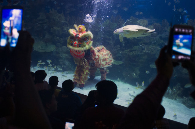 Children watch as divers perform an underwater Chinese lion dance on the first day of the Chinese Lunar New Year at Aquaria KLCC underwater park in Kuala Lumpur, Malaysia on Thursday, February 19, 2015. (Photo by Joshua Paul/AP Photo)