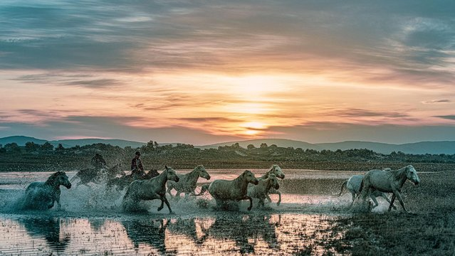 A herd of horses are guided by a shepherd, running through a river at sunrise at a stud-farm in Chifeng city, north China's Inner Mongolia Autonomous Region, 21 September 2020. (Photo by Rex Features/Shutterstock)