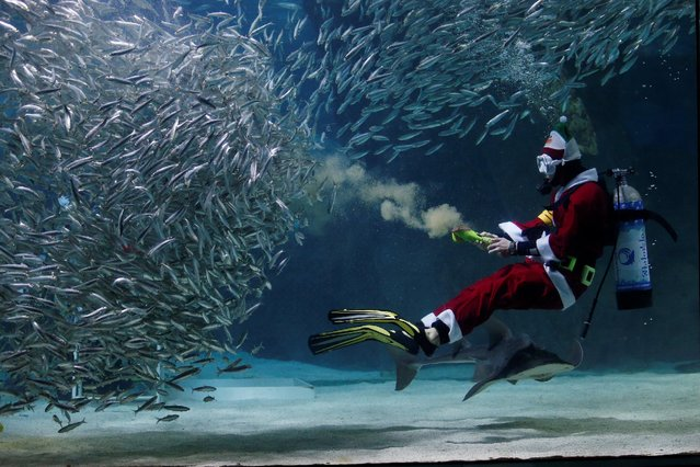 """A diver dressed in a Santa Claus costume performs with sardines during a promotional event for Christmas """"Sardines Feeding Show with Santa Claus"""" at the Coex Aquarium in Seoul, South Korea, December 17, 2016. (Photo by Kim Hong-Ji/Reuters)"""