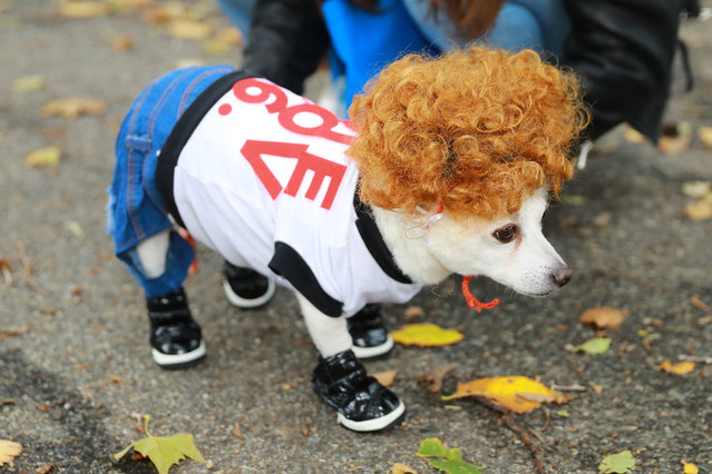 A dog dressed as Napoleon Dynamite participates in the 28th Annual Tompkins Square Halloween Dog Parade at East River Park Amphitheater in New York on October 28, 2018. (Photo by Gordon Donovan/Yahoo News)