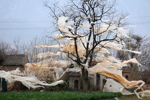 Agricultural greenhouses are damaged by gale winds, April 1, 2015, in Yuncheng, China. (Photo by ChinaFotoPress via Getty Images)