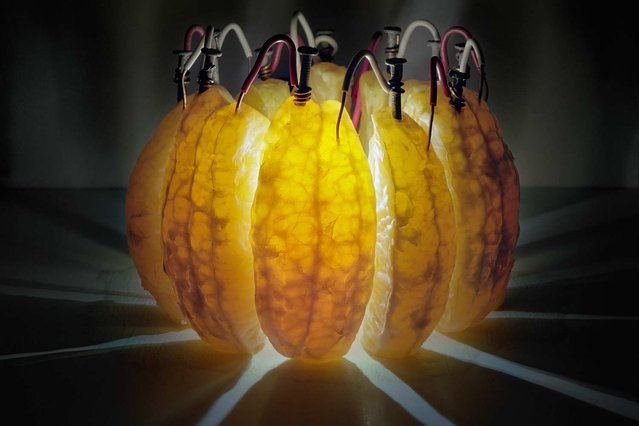 Wedges of an orange generate enough current and electrical juice – 3.5 volts – to power an LED. The fruit's citric acid helps electrons flow from galvanized nails to copper wire in this 14-hour exposure. This image was published in September's Visions of Earth, a trio of photos that appear in each issue of National Geographic. (Photo by Caleb Charland/National Geographic)