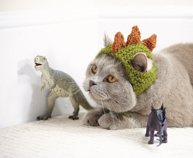 "This photo provided by Running Press and Quarto, Inc., shows Dinosaur from the book, ""Cats in Hats"", published by Running Press. (Photo by Liz Coleman/Running Press/Quarto, Inc. via AP Photo)"