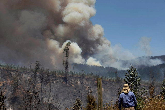 A villager watches a forest fire in the town of Florida in the Biobio region, south of Chile January 23, 2017. (Photo by Cristobal Hernandez/Reuters)