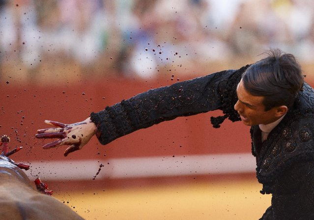 Spanish matador Jose Maria Manzanares drives a sword into a bull to kill it during a bullfight at The Maestranza bullring in the Andalusian capital of Seville, southern Spain April 24, 2015. (Photo by Marcelo del Pozo/Reuters)