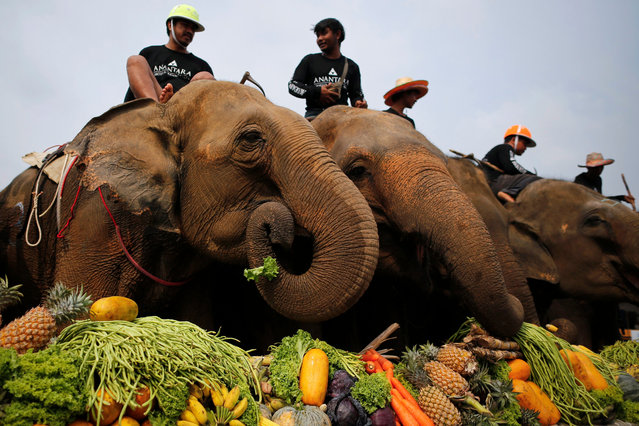 Elephants feast on fruits and vegetables during the elephant buffet prior to the start of the 2016 King's Cup Elephant Polo event in Bangkok, Thailand, 10 March 2016. The annual charity event, now in its 14th edition, runs until 13 March and will involve 18 elephants brought from tourist trekking camps in Pattaya as well as some unemployed in Surin. A total of 10 teams encompassing over 40 players will take part in the event directed at raising funds to improve the lives of elephants and elephant conservation. (Photo by Diego Azubel/EPA)