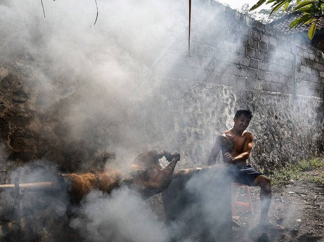 A man cooks roasted pig at Timbrah Village in Karangasem. (Photo by Putu Sayoga/Getty Images)