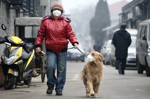 "A man and his dog, both wearing masks, walk along a small alley on a hazy day in Beijing, February 23, 2014. China's capital Beijing, under fire to take effective measures against air pollution, raised its four-tiered alert system to ""orange"" for the first time on Friday, as heavy smog was forecast to roll into the city over the next three days. (Photo by Reuters/Stringer)"