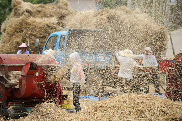 Farmers work next to a thresher threshing newly harvested wheat at a farm in Zaozhuang, Shandong province, China on June 5, 2019. (Photo by Reuters/China Stringer Network)