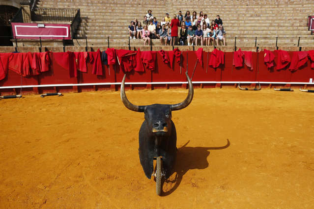 A group of tourists sit during a bullfight master class for schoolchildren at the Maestranza bullring in the Andalusian capital of Seville, southern Spain, April 23, 2014. (Photo by Marcelo del Pozo/Reuters)