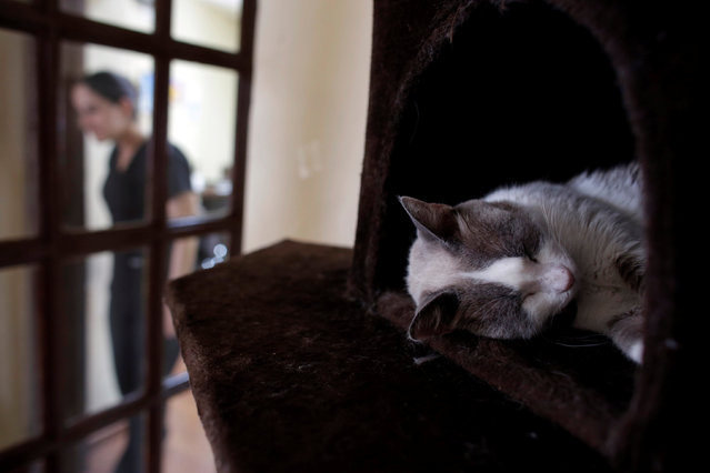 """A cat sleeps inside """"Meow"""" cafe, where diners can play, interact or adopt cats given away by their former owners or rescued from the streets, in Monterrey, Mexico, May 14, 2016. (Photo by Daniel Becerril/Reuters)"""