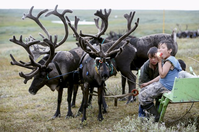 Sons of local herders sit near reindeer at a camping ground, some 200 km (124 miles) northeast of Naryan-Mar, the administrative centre of Nenets Autonomous Area, far northern Russia, August 2, 2015. (Photo by Sergei Karpukhin/Reuters)