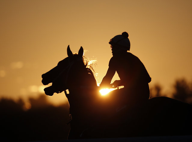 An exercise rider takes a horse for a morning workout at Saratoga Race Course on Thursday, July 23, 2015, in Saratoga Springs, N.Y. (Photo by Mike Groll/AP Photo)