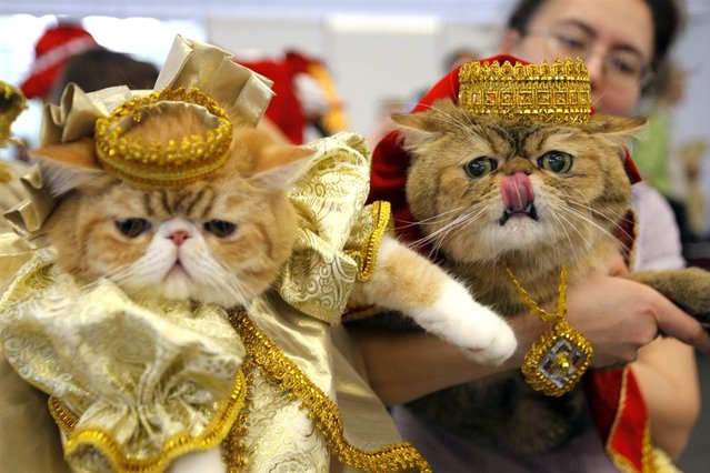 Two cats is costume are shown during a cat and dog exhibition in Minsk, Belarus on May 5, 2012