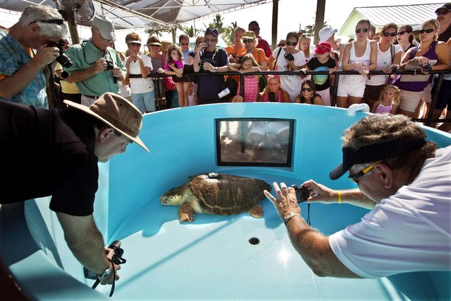 People take photos of Kahuna as she waits for her viewing tank to drain before being carried to a gurney for transport