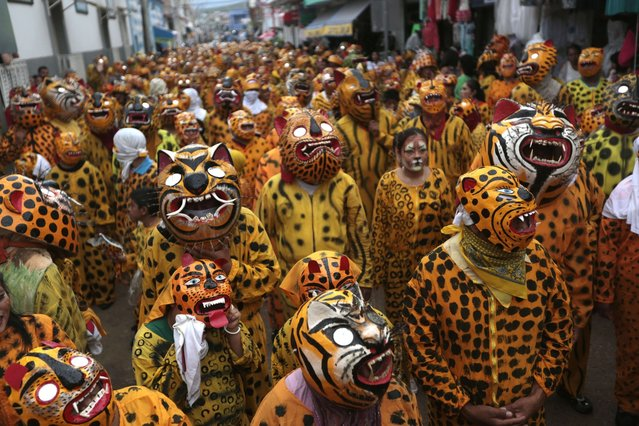 People dressed up as tigers take part in a traditional parade to ask for rain and plenty of crops, in Chilapa, Guerrero State, Mexico, on August 16, 2014. (Photo by Pedro Pardo/AFP Photo)
