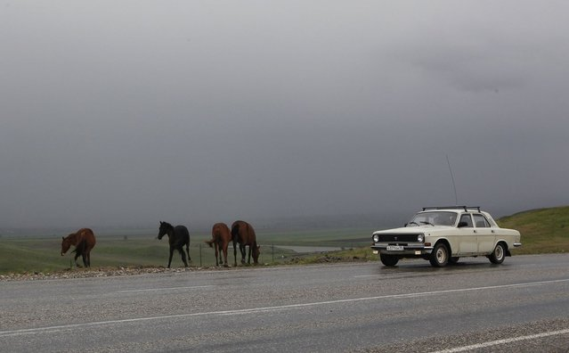 A car drives past horses, standing at the edge of a road, outside the Chechen capital Grozny April 24, 2013. (Photo by Maxim Shemetov/Reuters)