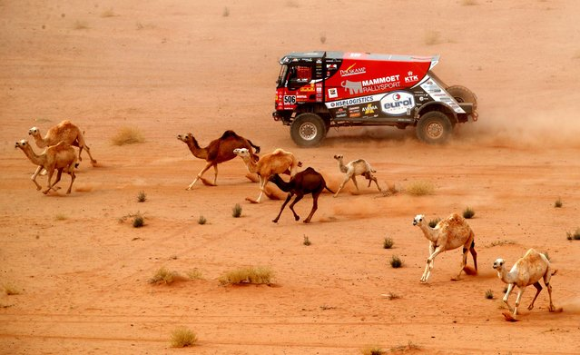 Mammoet Rallysport's Martin Van Den Brink and Co-Driver Wouter De Graaff in action surrounded by camels during stage 10, Neom to AlUla, Saudi Arabia on January 13, 2021. (Photo by Hamad I Mohammed/Reuters)