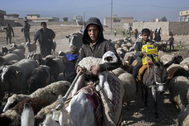 A boy holds a lamb in his arms as he and his family try to find safety from fighting between the Iraqi forces and Islamic State militants in Gogjali, on the eastern edges of Mosul, Iraq, Sunday, November 6, 2016. Iraq's special forces worked Sunday to fully clear neighborhoods on Mosul's eastern edge of Islamic State militants as IS claimed bombings killed at least 20 people elsewhere around the country. (Photo by Marko Drobnjakovic/AP Photo)