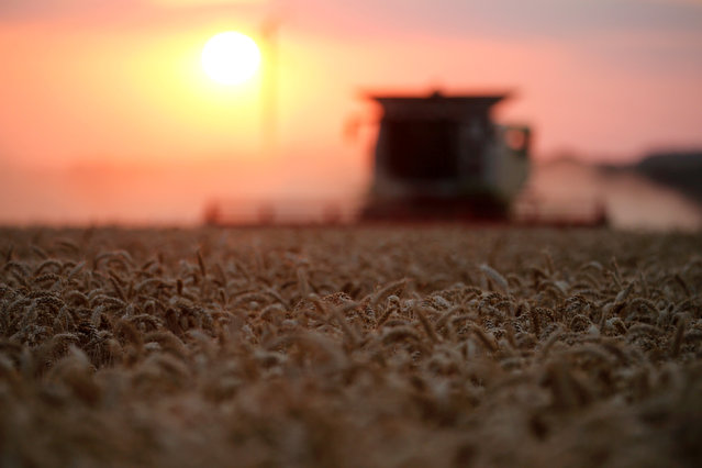 A French farmer harvests wheat, during sunset, in Bourlon, France July 19, 2018. (Photo by Pascal Rossignol/Reuters)