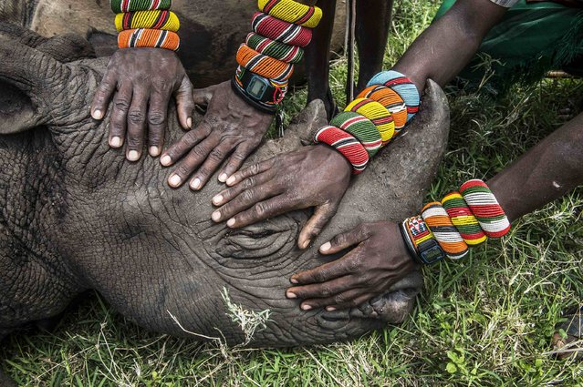 Ami Vitale, a U.S. photographer working for the National Geographic, won the Second Prize in the Nature Category, Singles, of the 2015 World Press Photo contest with this picture of a group of young Samburu warriors encountering a rhino for the first time in their lives in Lewa Downs, Kenya, in this picture taken November 24, 2014 and released by the World Press Photo on February 12, 2015. (Photo by Ami Vitale/Reuters/National Geographic/World Press Photo)