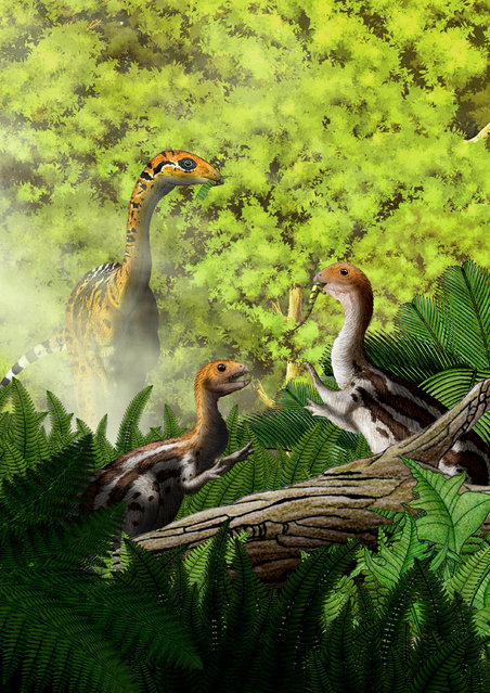 Limusaurus are seen in this illustration provided in this handout to Reuters, December 22, 2016. Scientists in China have identified the first known dinosaur species that grew teeth as juveniles then lost them as adults, a finding that may explain why birds have beaks, a study said Thursday. The research is based on fossils of a small and slender dinosaur known as Limusaurus inextricabilis, part of the theropod group of dinosaurs which were the ancestors of modern birds. It likely ate meat as a youngster but transformed into a beaked adult that probably subsisted on plants, said the study in Current Biology. Among contemporary fish and amphibians, such tooth loss is commonly seen. The platypus, a beaked mammal, loses its teeth, too. Researchers said the discovery of tooth loss in the Limusaurus marks the first in the fossil record and the first among reptiles. (Photo by Yu Chen/Reuters)