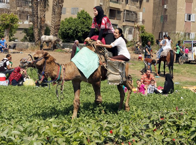 Girls enjoy a camel ride in a public park as Egyptians celebrate the spring holiday of Sham el Nessim on the outskirts of Cairo, April 13, 2015. (Photo by Asmaa Waguih/Reuters)