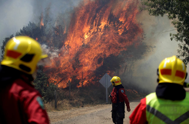 Firefighters are pictured during a forest fire in the town of Florida in the Biobio region, south of Chile January 23, 2017. (Photo by Cristobal Hernandez/Reuters)