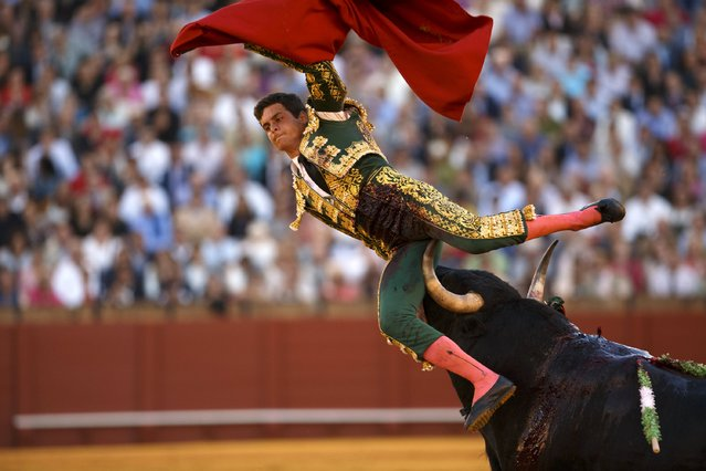 Spanish matador David Galvan is tackled by a bull during a bullfight at The Maestranza bullring in the Andalusian capital of Seville, southern Spain April 24, 2015. (Photo by Marcelo del Pozo/Reuters)