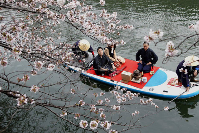 A couple on a boat admires cheery blossoms as they enjoy a tea ceremony in a river in Yokohama, near Tokyo Sunday, March 31, 2019. People all over the country go out to enjoy cherry blossoms this weekend as the country's iconic flower is full bloom. (Photo by Shuji Kajiyama/AP Photo)