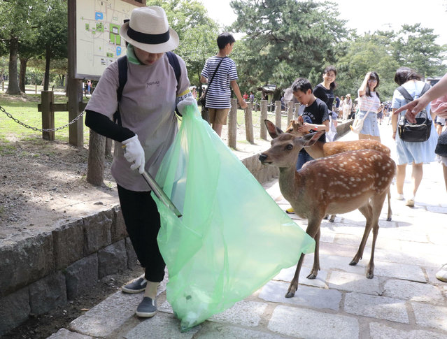 A volunteer picks up plastic products during a cleanup campaign at a famed park in Nara, western Japan, Wednesday, July 10, 2019. Nine deer at the park have died recently after swallowing plastic bags. Nara Park has more than 1,000 deer and tourists can feed them special sugar-free crackers sold in shops nearby. The crackers don't come in plastic bags, but people still carry them. A veterinarian says the deer may associate the plastic with food. (Photo by Kyodo News via AP Photo)