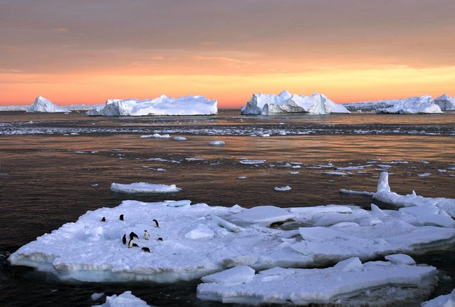 Adelie penguins stand atop ice near the French station at Dumont d'Urville in East Antarctica January 22, 2010. (Photo by Pauline Askin/Reuters)