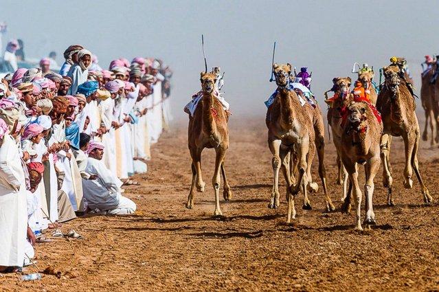 Camel racing, north of Wahiba Sands, Oman. (Photo by Jason Edwards)