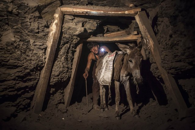 A miner with a donkey makes his way through the low and narrow tunnel leading out of a coal mine in Choa Saidan Shah in Punjab province, April 29, 2014. Workers at this mine in Choa Saidan Shah dig coal with pick axes, break it up and load it onto donkeys to be transported to the surface. (Photo by Sara Farid/Reuters)