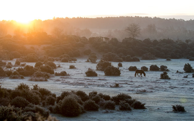 Ponies graze as the sun rises over Rockford Common in the New Forest, Hampshire on February 6, 2020. (Photo by Andrew Matthews/PA Images via Getty Images)