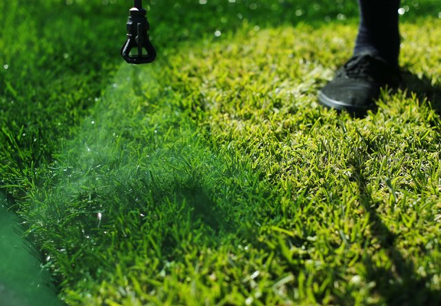 Drew McClellan of A lucky Lawn paints green dye onto drought affected grass at a home in Santa Fe Springs, California October 1, 2014. (Photo by Mike Blake/Reuters)
