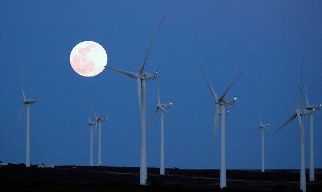 The super Full Worm Moon rises over a wind turbine farm near Villeveyrac, France, 09 March 2020. (Photo by Guillaume Horcajuelo/EPA/EFE)