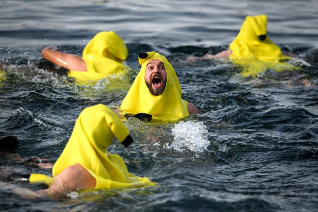 """A swimmer dressed in a banana suit reacts as he dives into Lake Geneva during the 79th """"Coupe de Noel"""" (Christmas cup) swimming race, on December 17, 2017 in Geneva. More than 2,000 participants took part in the event, a 120m-long swim off Geneva's banks into the 6.1 degrees Celsius water. (Photo by Fabrice Coffrini/AFP Photo)"""