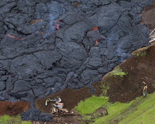 A man takes a picture of the lava flow from Mount Kilauea in Pahoa, Hawaii October 29, 2014. The slow-moving river of molten lava from the erupting Kilauea volcano crept over residential and farm property on Hawaii's Big Island on Wednesday after incinerating an outbuilding as it threatened dozens of homes at the edge of the former plantation town. (Photo by Marco Garcia/Reuters)