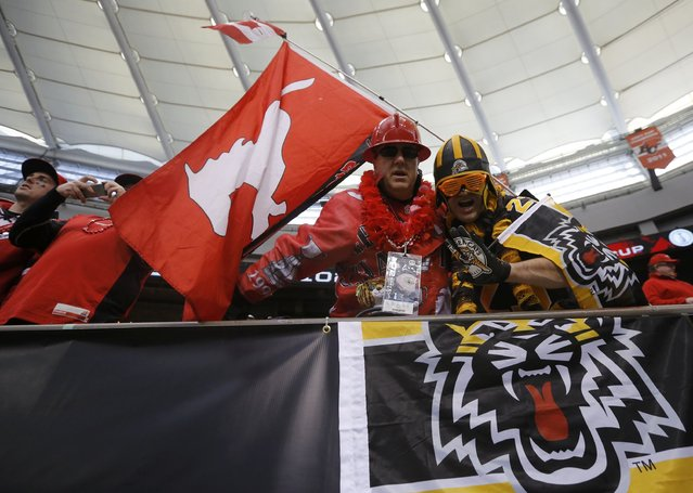 A Calgary Stampeders fan (L) and a Hamilton Tiger Cats fan cheer ahead of the CFL's 102nd Grey Cup football championship, to be played by their teams in Vancouver, British Columbia, November 30, 2014. (Photo by Mark Blinch/Reuters)