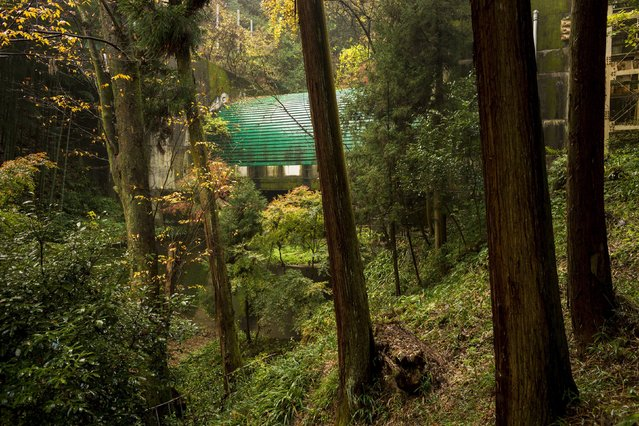 The Tenouzan tunnel for the Meishin highway cuts through the forest behind Suntory Holdings' Yamazaki Distillery in Shimamoto town, Osaka prefecture, near Kyoto, December 1, 2014. (Photo by Thomas Peter/Reuters)