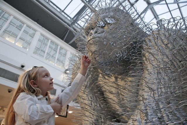 """A girl touches an art installation depicting a gorilla entitled """"Silver Back"""" by artist David Mach, as she poses for the photographers during a press preview of a themed auction that features the animal as artistic inspiration, entitled """"Creatures Great and Small"""", in London, Monday, December 15, 2014. (Photo by Lefteris Pitarakis/AP Photo)"""