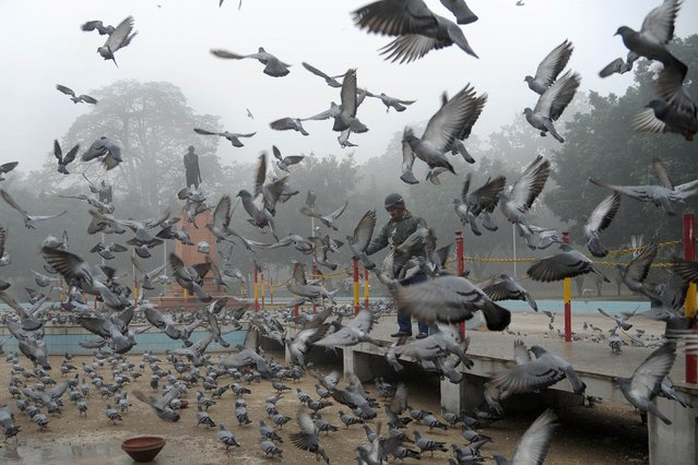 An Indian man feeds pigeons near a statue of Mahatma Gandhi in a garden on a foggy day in Amritsar on December 18, 2014. Seasonal fog and cold weather is taking hold in northern India. (Photo by Narinder Nanu/AFP Photo)