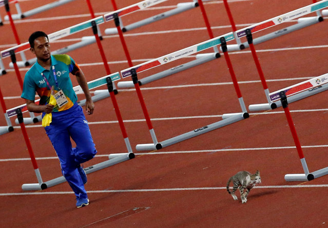 A volunteer tries to chase a cat away from the track prior to the start of the womens 100 m hurdle heats during the athletics competition at the 18 th Asian Games in Jakarta, Indonesia, Saturday, August 25, 2018. (Photo by Willy Kurniawan/Reuters)